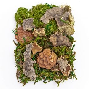 Moss and natural elements 30g - DPZA-036